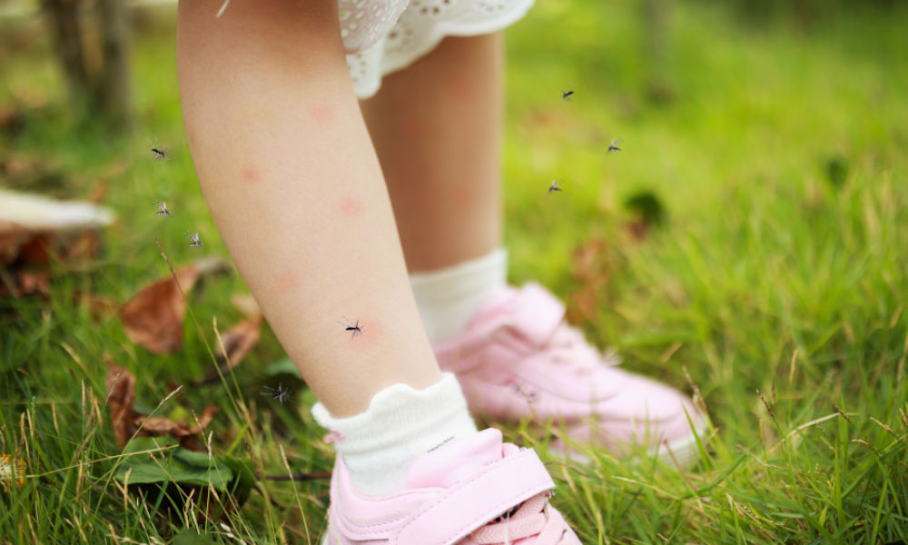 The Coronavirus can be transmitted through bugs and mosquitoes.